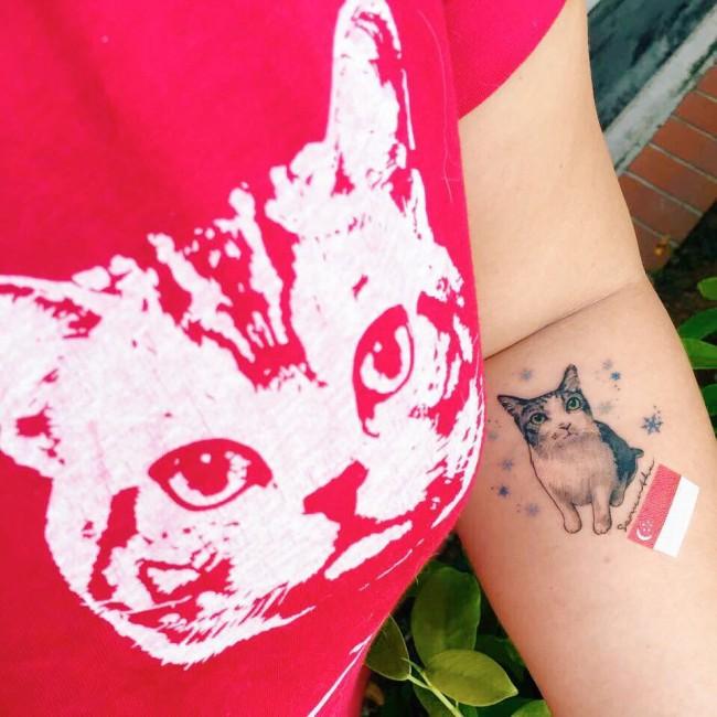 cat (12)