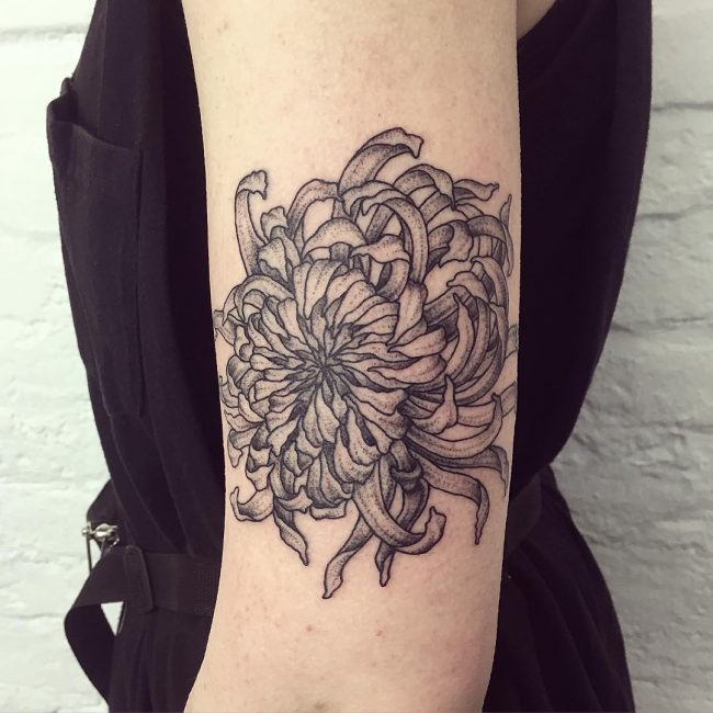chrysanthemum tattoo36
