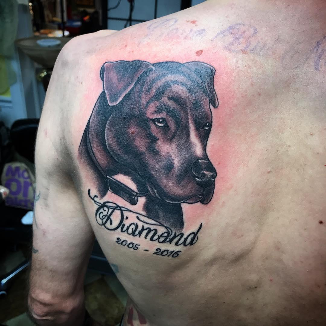 Татуировки с питбулями фото